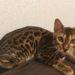 独身社会人が猫を飼うべき6つの理由